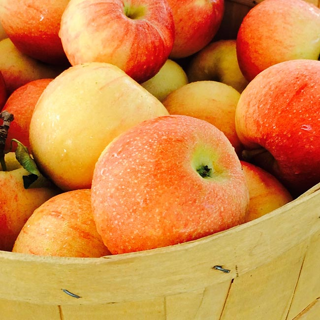 Farmers Market Finds for September