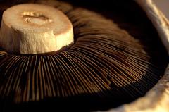 Mushroom Minestrone Recipe